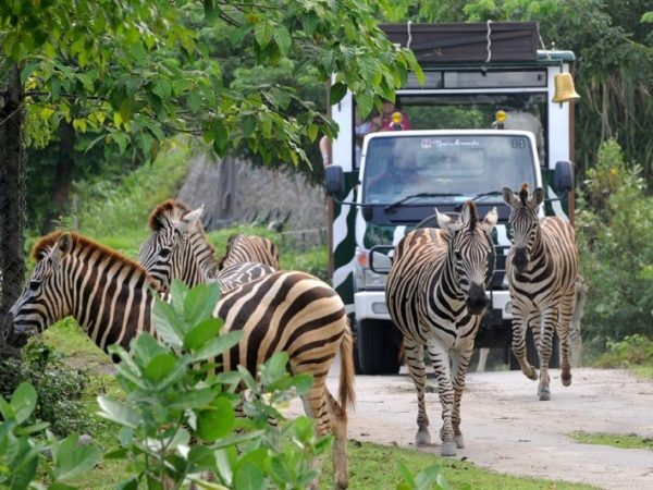 jungle-hopper-package bali destiny travel