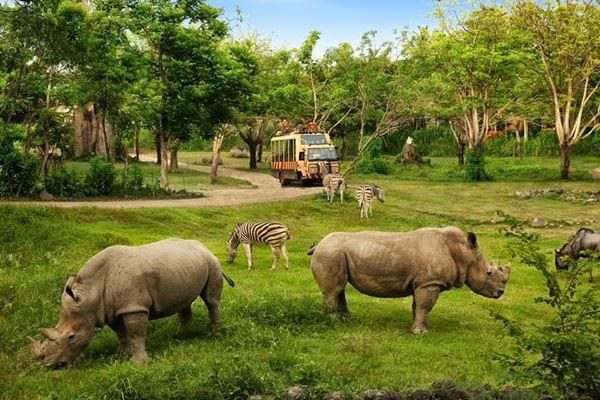 rhino-package bali destiny travel