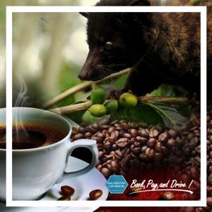 wisata coffe plantation di bali