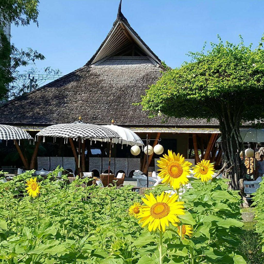 5 Restoran Dengan Pemandangan Sawah Di Bali
